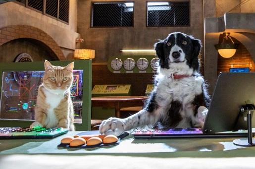 psy i koty premiera dvd dla rodzin z dziećmi 1