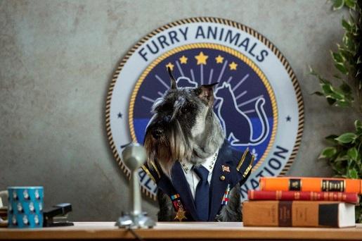psy i koty premiera dvd dla rodzin z dziećmi 2