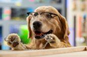 psy i koty premiera dvd dla rodzin z dziećmi 6