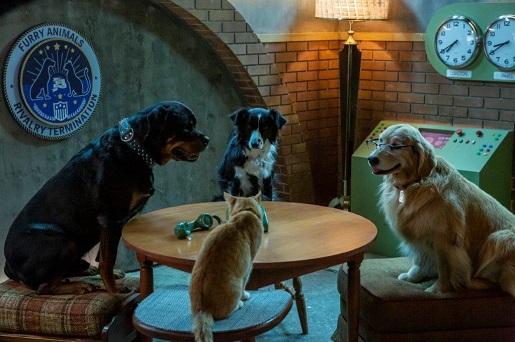 psy i koty premiera dvd dla rodzin z dziećmi