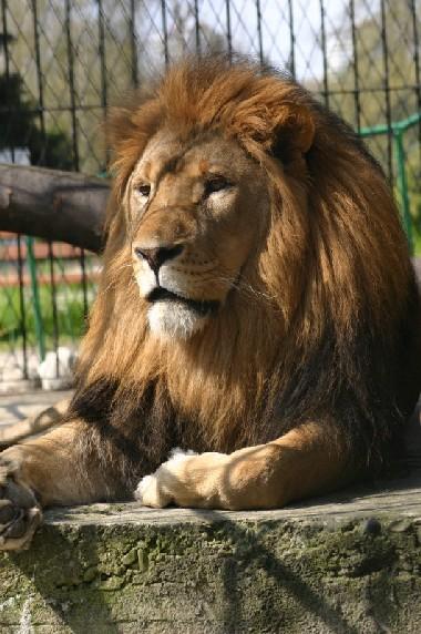 rodzinne atrakcje dla dzieci zoo silesia ceny opinie