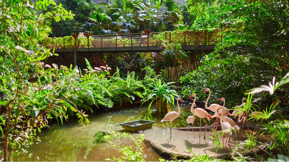 tropikalna wyspa tropical island berlin ceny opinie bilety z dzieckiem las tropikalny