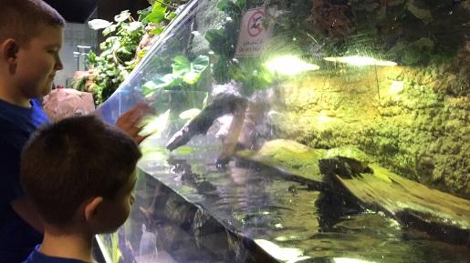 underwater zoo dubai - opinie podwodne zoo oceanarium dubaj