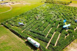 władysławowo labirynt w polu kukurydzy swarzewo 2021