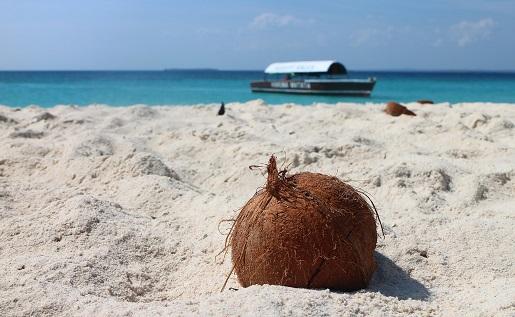 Zanzibar jaka waluta co zobaczyć na Zanzibarze atrakcje opinie