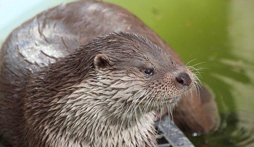 zoo bydgoszcz najlepsze atrakcje kujawskopomorskie opinie