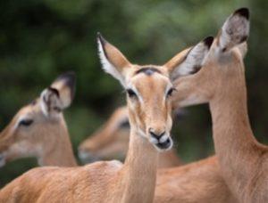 zoo człuchów canpol atrakcje zwierzęta antylopy