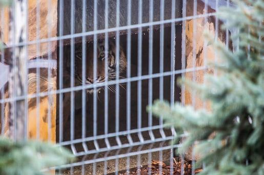 zoo człuchów tygrysy canpol opinie godziny otwarcia klatka