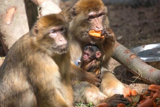 zoo dolina charlotty opinie atrakcje cennik