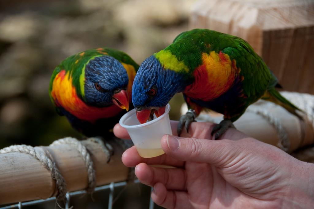 zoo egzotyczne kaszuby papugarnia
