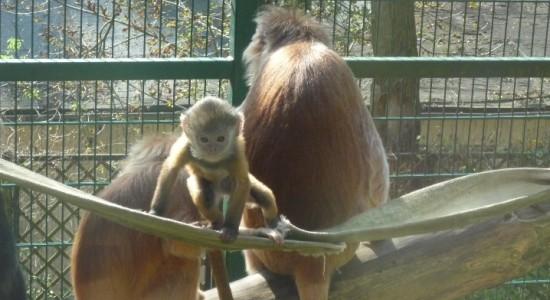 Gdańsk atrakcje dla dzieci ogród zoologiczny
