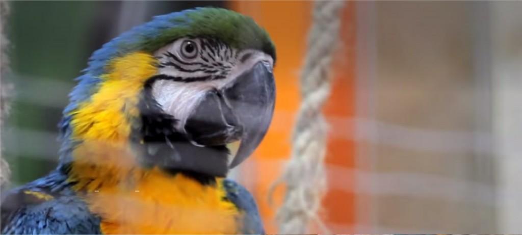 zoo kaszuby atrakcje dla dzieci