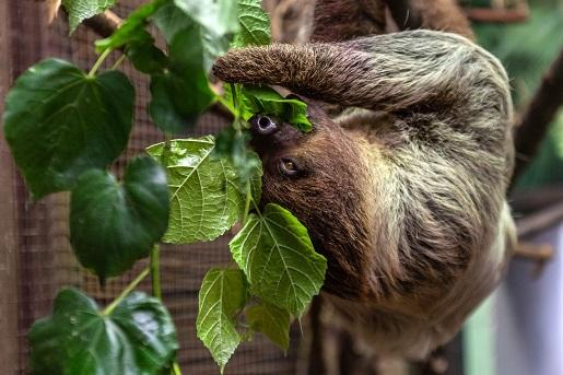 zoo lodz najlepsze ogrody zoologiczne w polsce rodzinne atrakcje