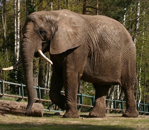 zwierzęta Słonie ZOO Gdańsk opinie ceny atrakcje dla dzieci